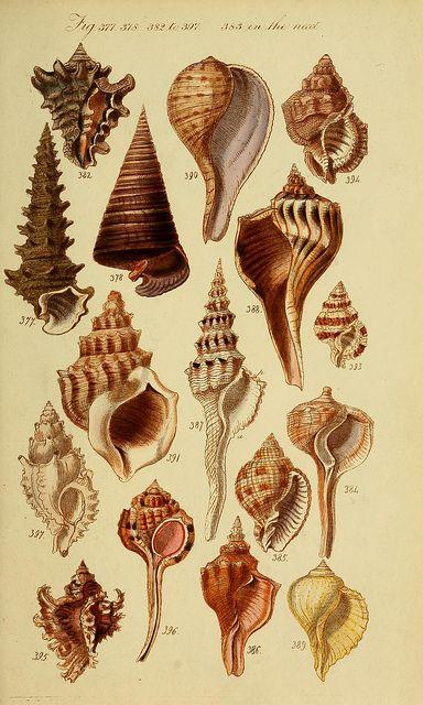 **huge set - Biodiversity Heritage Library   Flickr