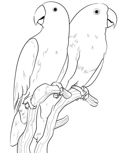 Pet Bird Parrot Finch Canary Coloring Pages