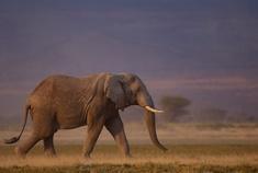Passage To Africa - Amboseli - Kenya #Elephant
