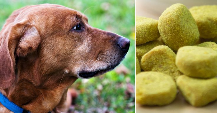 Odds are, you've heard about the benefits of turmeric for both people and pets. And while turmeric would likely benefit dogs of any age, its benefits are particularly pronounced for senior pets. Turmeric (or Indian saffron) is the spice that gives …