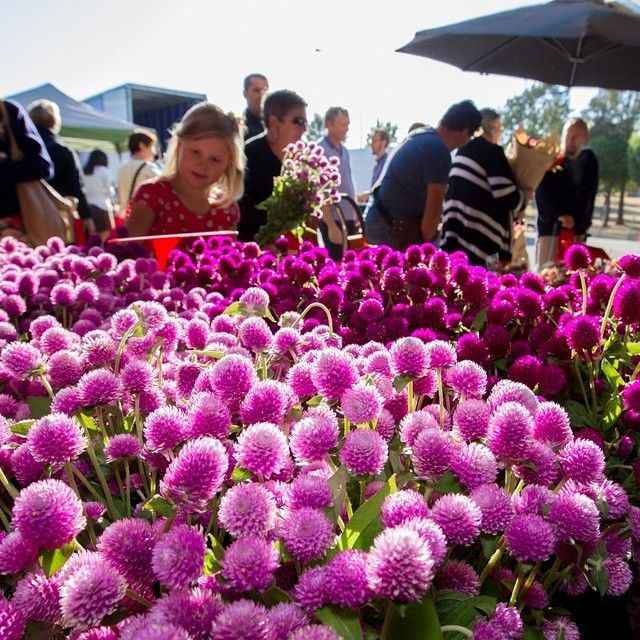 There's no better way to start your Saturday than at the buzzing Capital Region Farmers Market, located in Canberra's Exhibition Park. It's one of Australia's largest and most authentic farmer's markets and known by foodies across the country. Who would you like to visit the @crfamersmarket with? #visitcanberra