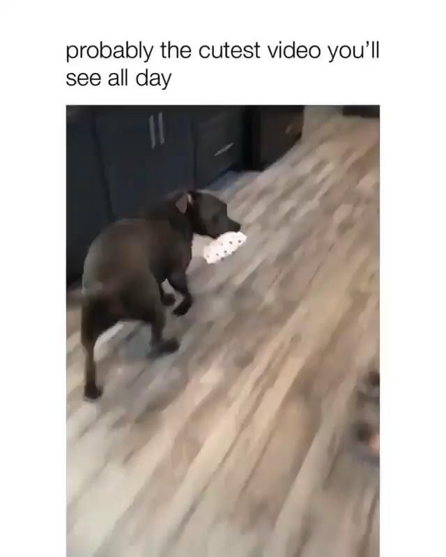 Pin On Dogs Videos