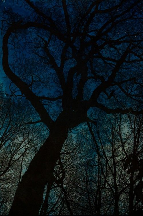 Night Descends on the Mountain with Cyanotype by Skoonberg on Etsy, $600.00Hannahskoonberg