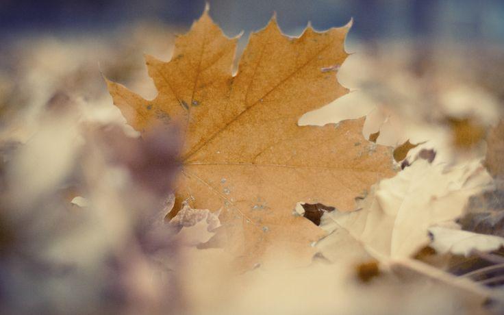 Widescreen Wallpaper: leaf