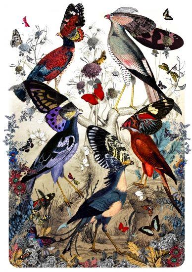Fimm Fuglar by Kristjana S Williams