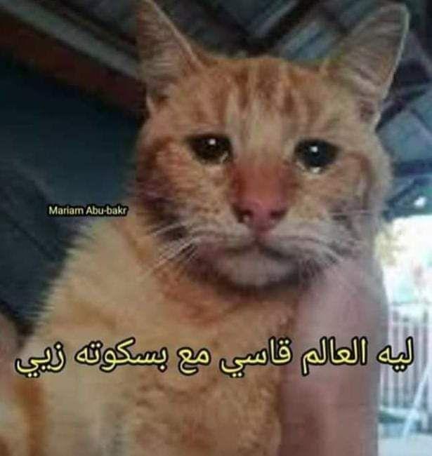 لعنة الفراعنة عشقت فرعون Beautiful Photography Nature Funny Arabic Quotes Animals