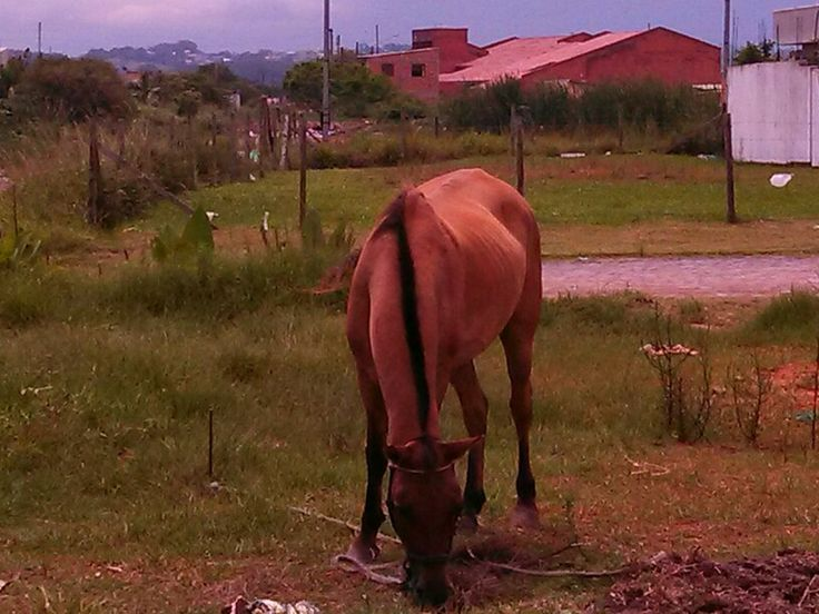 Cavalo no balneário de Torres/RS/Brasil.