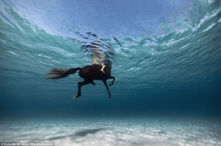 It's not just humans featured in his portfolio. This mesmerising image shows a horse and rider swimming in the sea