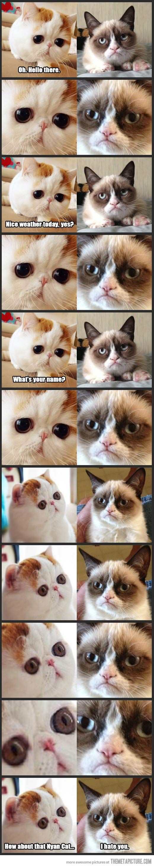 Snoopy Cat Meets Grumpy Cat… @Chloe Parker....... I hate cats but I LOVE the grumpy cat. He and I are a lot alike:)