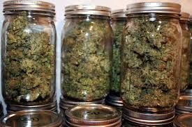 Buy Sour Diesel,AK47,Purple Haze,Orange Kush,Blue Dream White widow, Purple kush,master kush,OG Kush for sale  TEXT……..720.248.8130 EMAIL……bookf9701@gmail.com   -Lemon Haze -Super Silver Haze -Strawberry Cough -Super Lemon Haze -Purple Haze -Silver Haze -Hash Oil, -Honey Comb Wax Oil -Wax Oil -Cannabis Oil -BUTANE OIL -All type of Marijuana   (FAST AND OVERNIGHT DELIVERY IS AVIALABLE )  ORDER TODAY TEXT……..720.248.8130 EMAIL……bookf9701@gmail.com