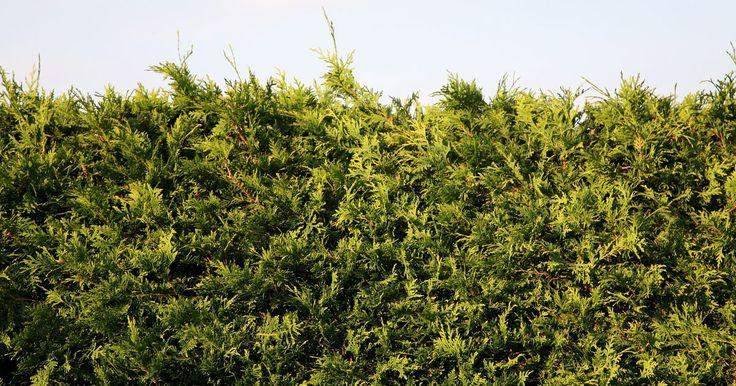 Como bloquear a vista com plantas perenes. As formas interessantes das plantas perenes e a habilidade que elas têm de manter as folhas verdes o ano inteiro as tornam ideais para bloquear a visão, e o que você deseja bloquear determinará o tipo de planta que deverá usar. Em entornos urbanos, geralmente se utilizam plantas que parecem mais arbustos do que árvores, mas as zonas suburbanas ...