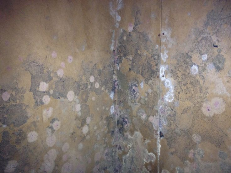 how to kill mold on drywall
