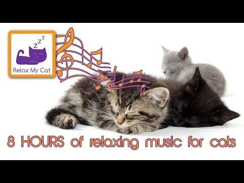 awesome 8 HOURS OF CAT MUSIC – RELAXING MUSIC FOR CATS – 8 HORA GATO MÚSICA LONG RELAXING SOUNDS