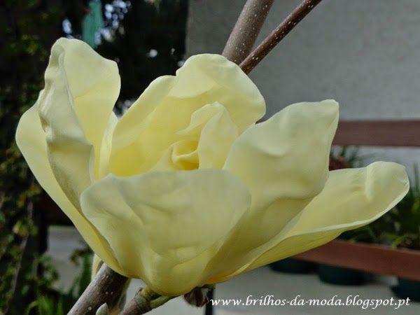 Brilhos da Moda: Flores, uma maravilha da natureza # 25