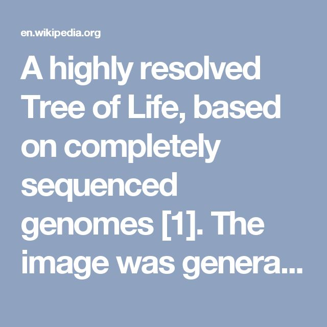 "A highly resolved Tree of Life, based on completely sequenced genomes [1]. The image was generated using iTOL: Interactive Tree Of Life [2], an online phylogenetic tree viewer and Tree Of Life resource. Eukaryotes are colored red, archaea green and bacteria blue. PNG image traced by hand to produce SVG version. 1. ↑ Ciccarelli, FD (2006). ""Toward automatic reconstruction of a highly resolved tree of life."" (Pubmed). Science 311(5765): 1283-7. 2. ↑ Letunic, I (2007). ""Interactive Tree Of Life…"