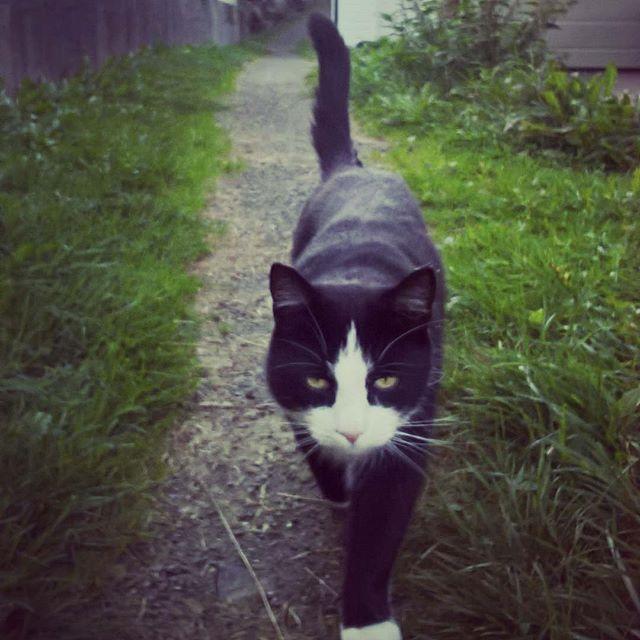 #autumn #cat #nature #road #catsofinstagram #blackandwhite #grass #island #dream #garden #dirt #gravel #paw #cute #whisker #animal #pet #confident #strut