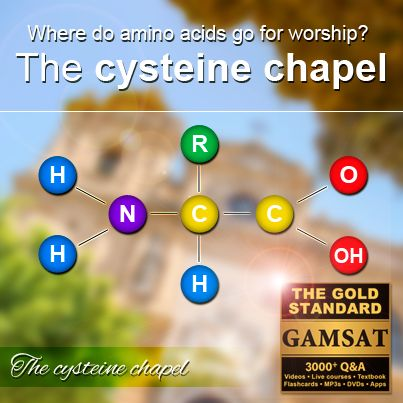 Where do amino acids go for worship? The cysteine chapel!