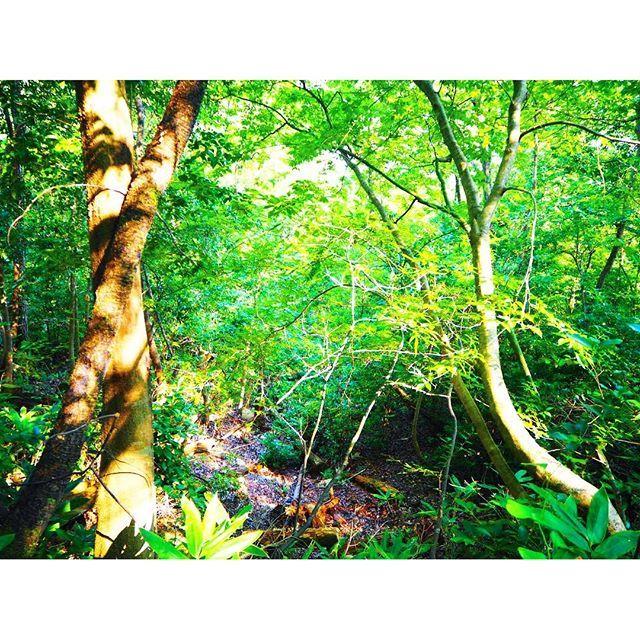【mako___stagram】さんのInstagramをピンしています。 《・  ・ いくら田舎に住んどるとは言え こんなに大自然に触れ合ったの 久々やった〜かなりリフレッシュ ・ 気持ちよくて思わずため息でた✨ ・ ・ #竹田城#日本のマチュピチュ #森#ただただ森#緑 #大自然#リフレッシュ #ありがとう #昔は山登り大好きやったのに今は老婆のよう #もっと運動しよっ  #空気綺麗すぎ#酸素大量生産 #この時期の空気小学校の運動会の練習思い出す #連投ごめんなさい #今日もまた不眠症 #一眼レフ#olympus #使いこなされへん》