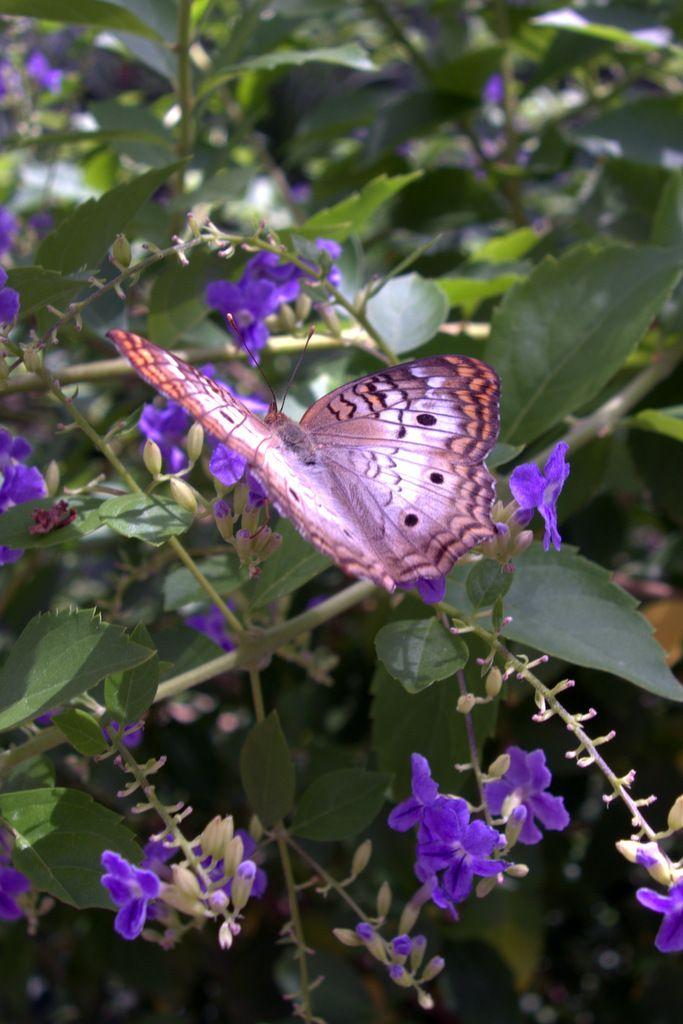 butterfly-wonderland-butterfly-wonderland