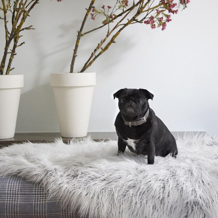 Cosy canines can snuggle up in luxury with these Capello Faux Fur dog blankets from MiaCara