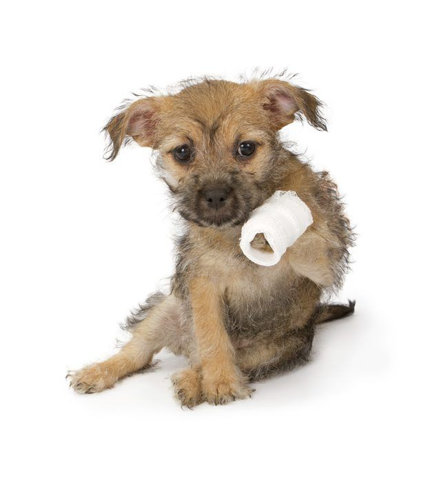 How to Care for a Dog's Torn Paw Pad. A paw pad, or footpad, is the toughest part of a dog's skin. Paw pads are located on each toe and under the meta…