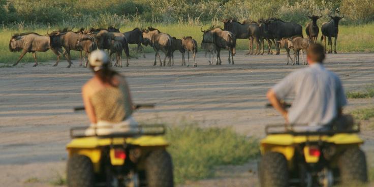 Haina Lodge quad bike safari  #kalahari #botswana #safari #africa #travel #bushmen #desert #bigfive #wildlife #animals #lodgeaccommodation #gameviewing