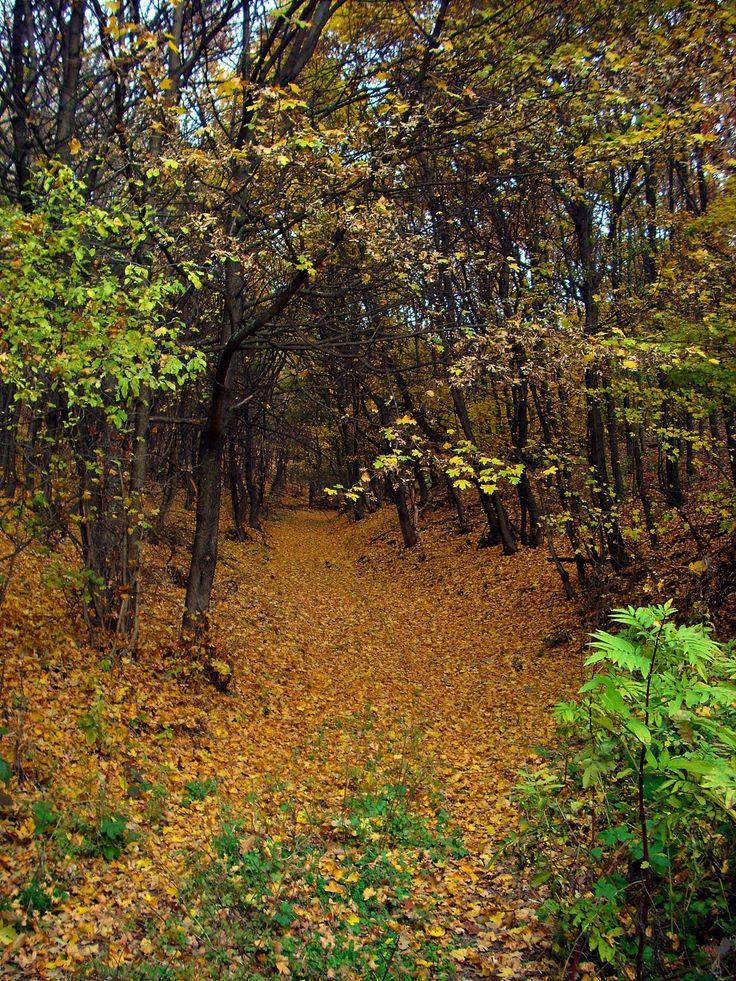 Az érintetlen őszi levélszőnyeg