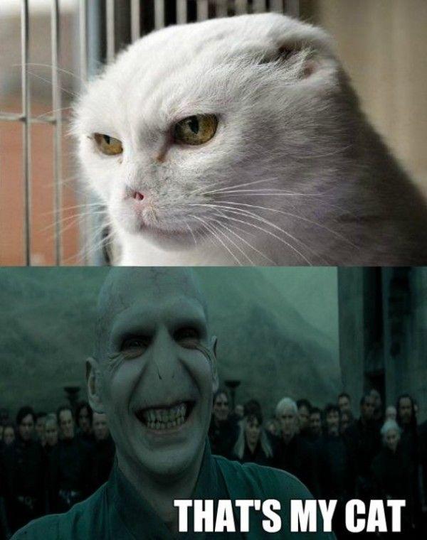 Not Funny Cat Meme : Voldemort cat meme lol fandoms are families