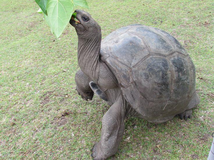 VIDA Statement Bag - Galapagos Tortoise by VIDA GvltzAp