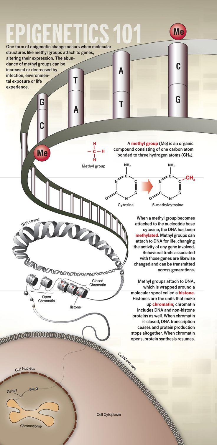 Grandma's Experiences Leave Epigenetic Mark on Your Genes   DiscoverMagazine.com