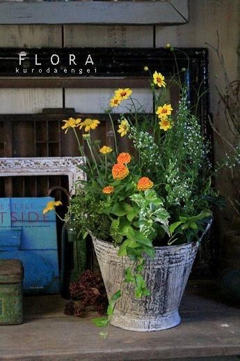 フローラのガーデニング・園芸作業日記-ジニア ジニータ 寄せ植え