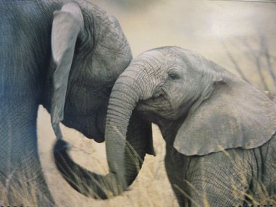 I love elephants. They're my absolute favourite and this picture warms the cockles of my heart <3
