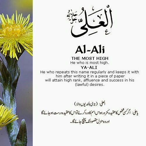 Al Ali