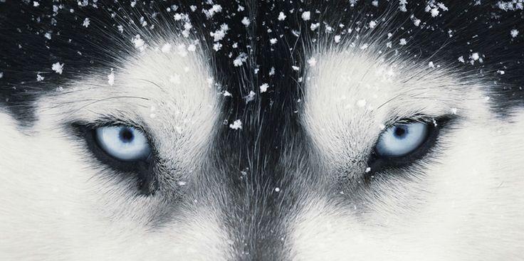 Azok a kék szemek!