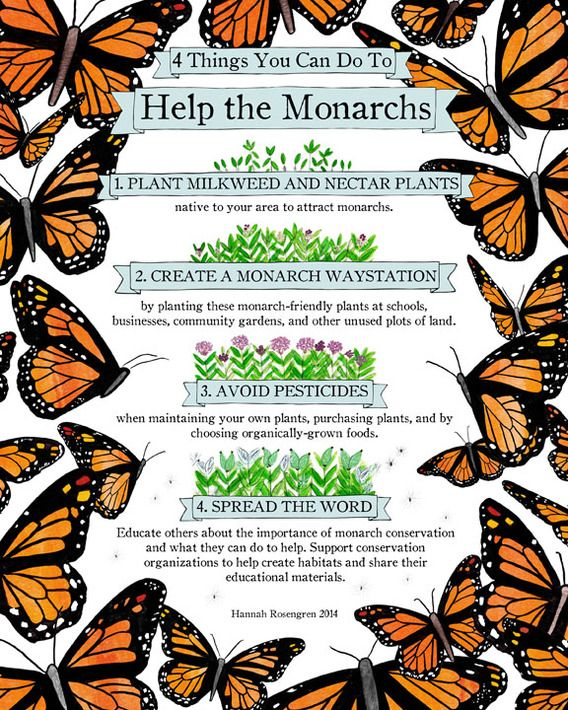 Four Things You Can Do To Help The Monarchs Print   Hannah Rosengren 2014