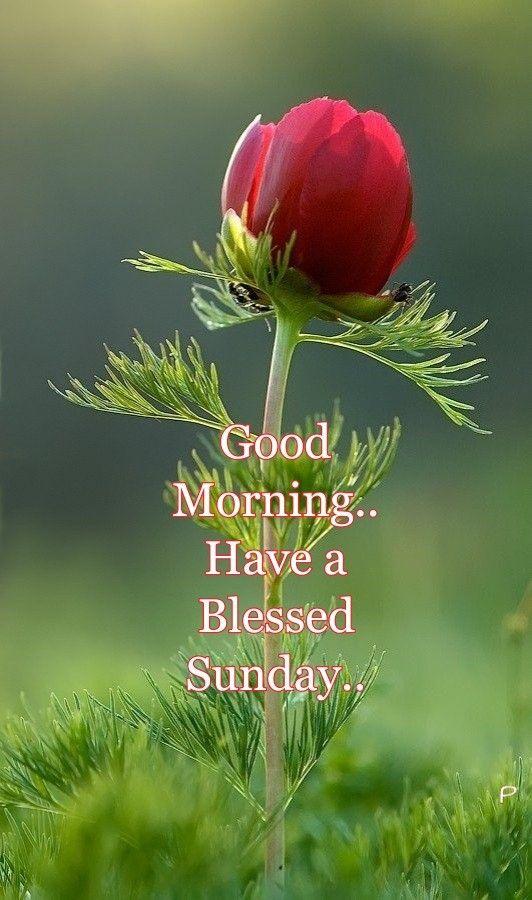 Good Sunday Morning greetings