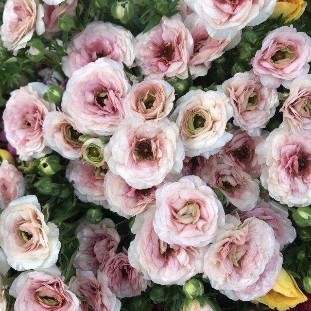 46 Best Ideas For Chinese Garden Decor Flowers Ranunculus Flower Hats