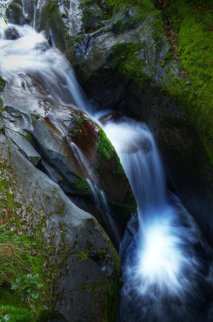 Photo taken by Shaun Thomason in Egmont National Park, New Plymouth RD 6, New Zealand.
