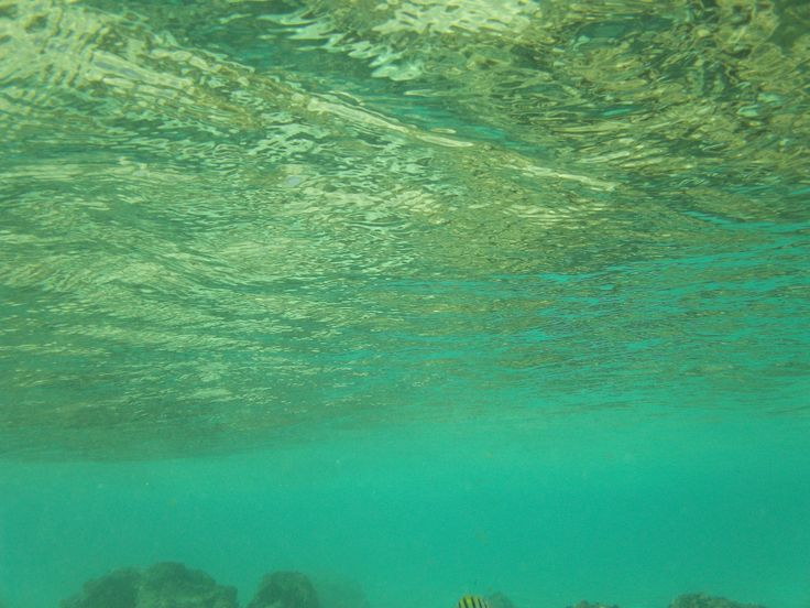Bajo del mar, bajo del mar, eres sirena, vives cantando, eres feliiiz.