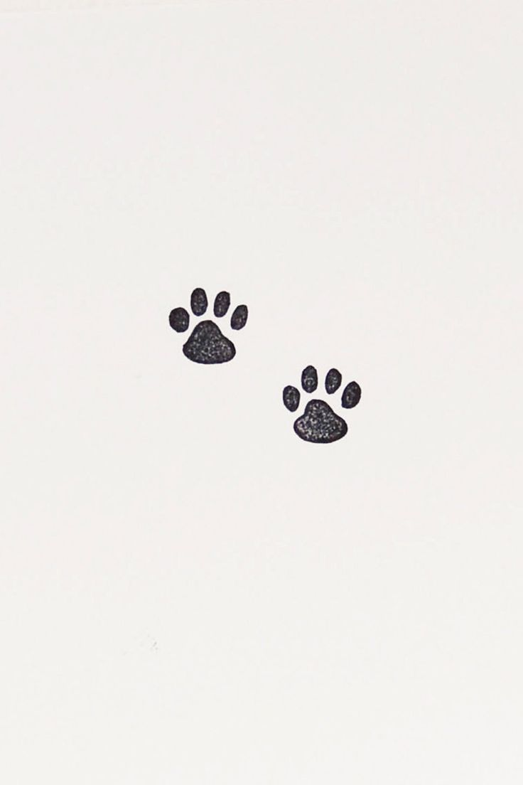Cat Paw Stamp Tiny Stamps Handmade Stamps Cat Lover