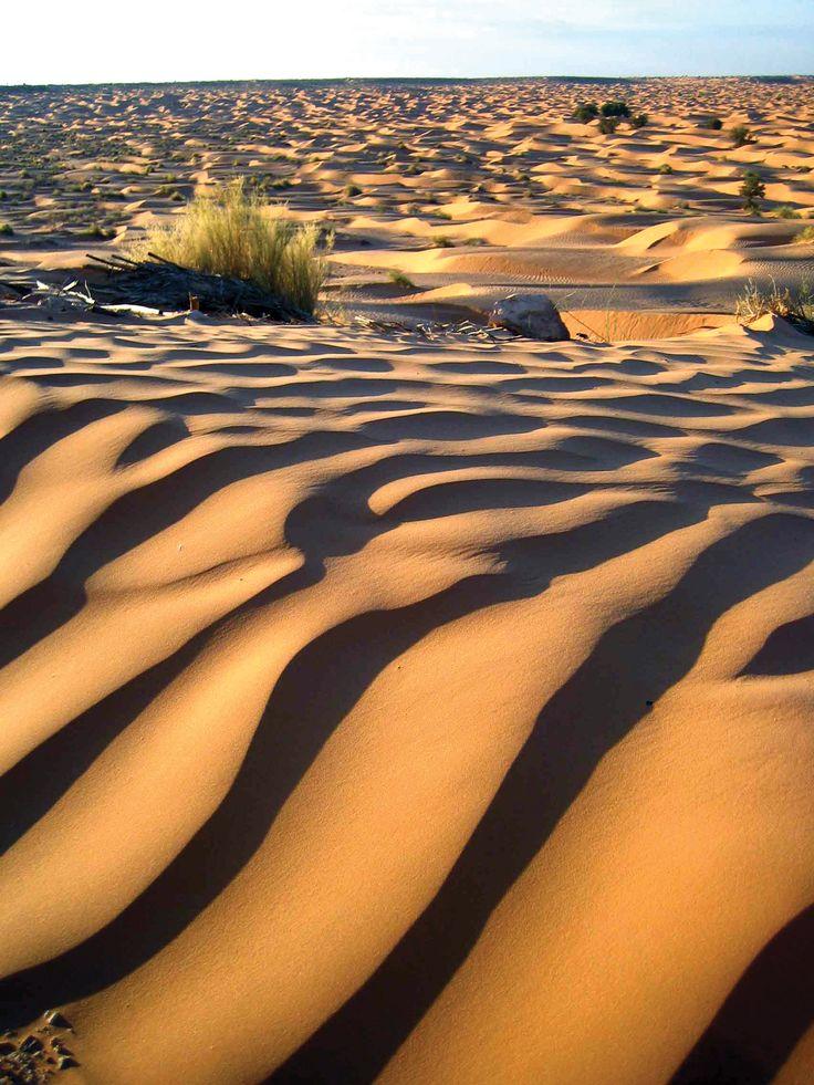 Dunes - désert du Sahara en Tunisie