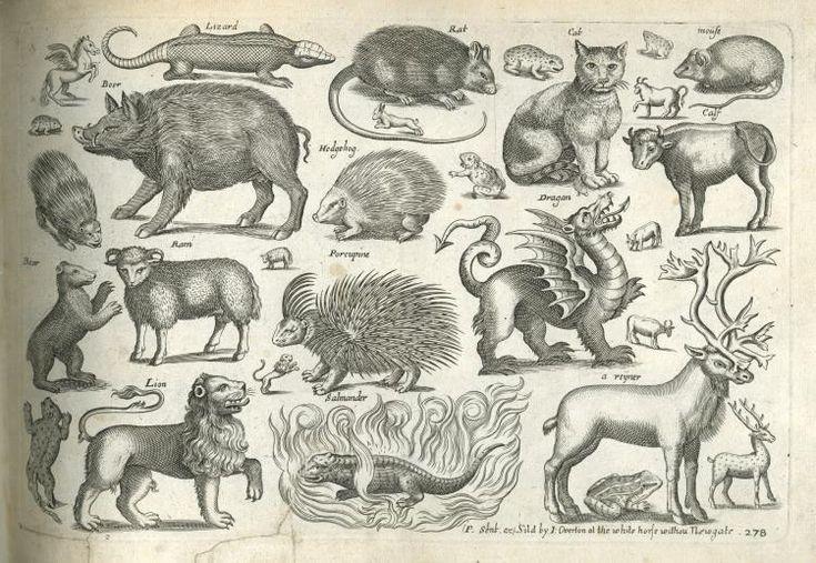 Старинные изображения животных.A Book of Four-Footed Beasts-1658-64: philologist