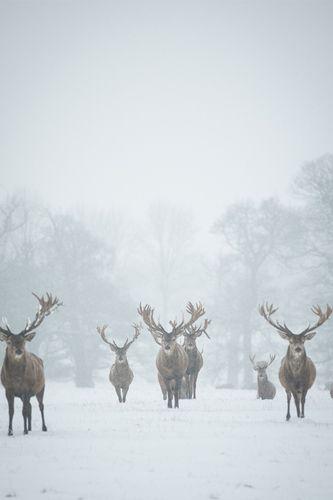 Dernières lueurs d'hiver | Cachemire et soie - Blog photo, Paris, mode, voyage