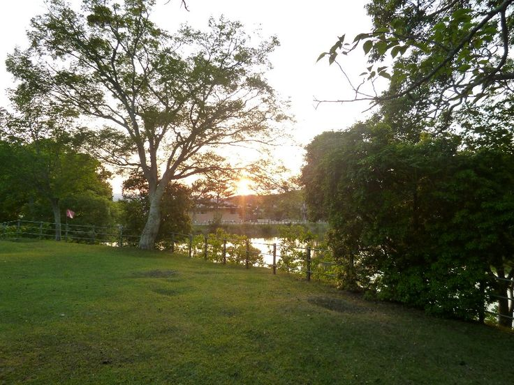 奈良公園へようこそ -  150602 東大寺大仏池の夕日