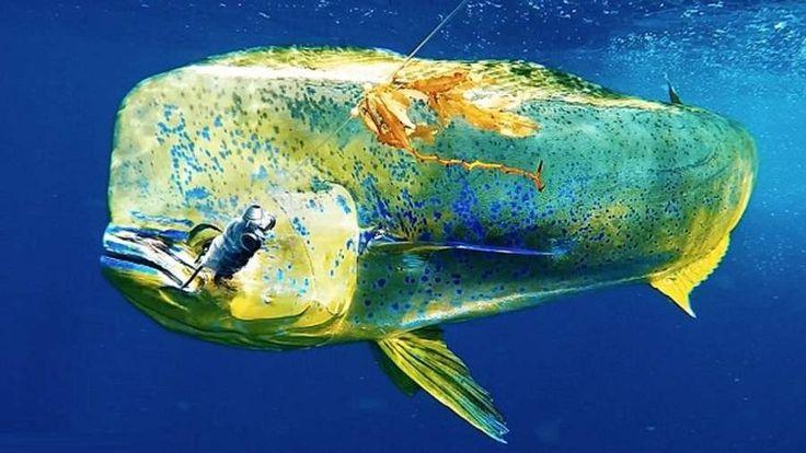 GoFish Underwater Fishing Camera  , - ,   GoFish underwate...