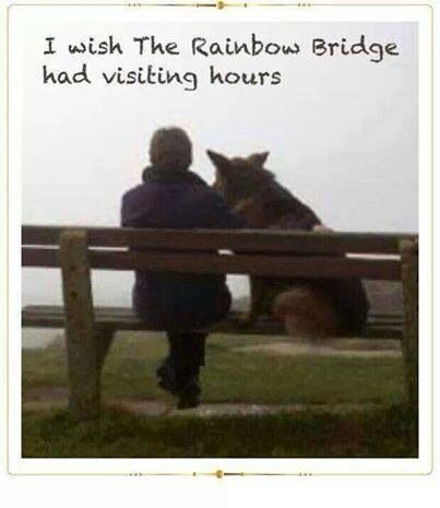 I will carry you in my heart and mind all the days of my life until one day, I too will cross over to Rainbow Bridge and gleefully join you there, our youth and vigor restored, never ever to part for all eternity~