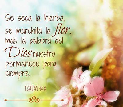 Isaías 40:8 Secase la hierba, marchitase la flor; mas la palabra del Dios…