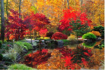 Japanese Maples Festival at Gibbs Gardens, Ball Ground ...