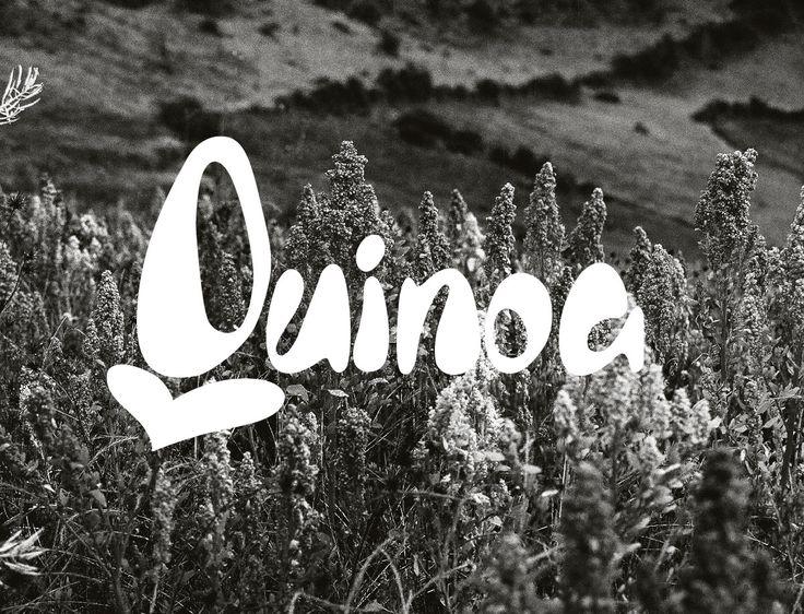 Logo of quinoa seeds' product | December 2016 | Roberto García