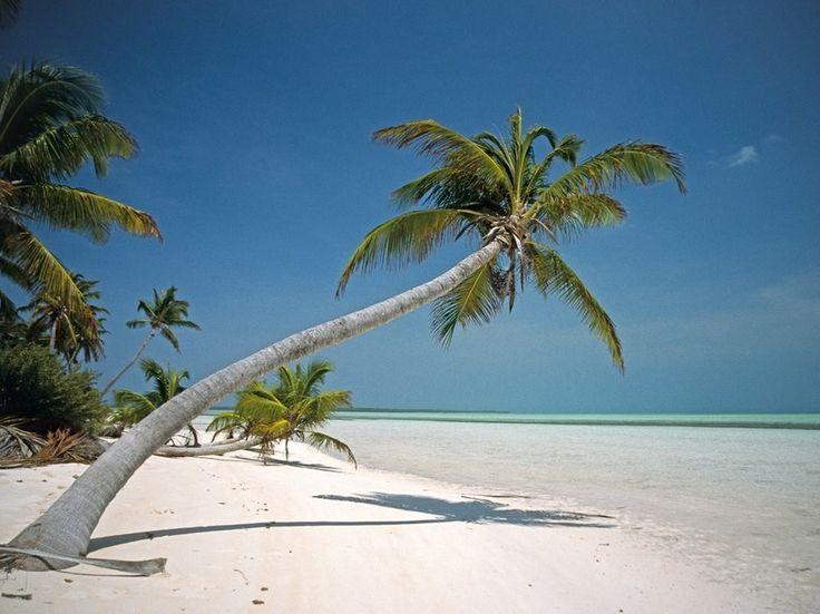кокосовые килинг острова фото мёртвых утки уже
